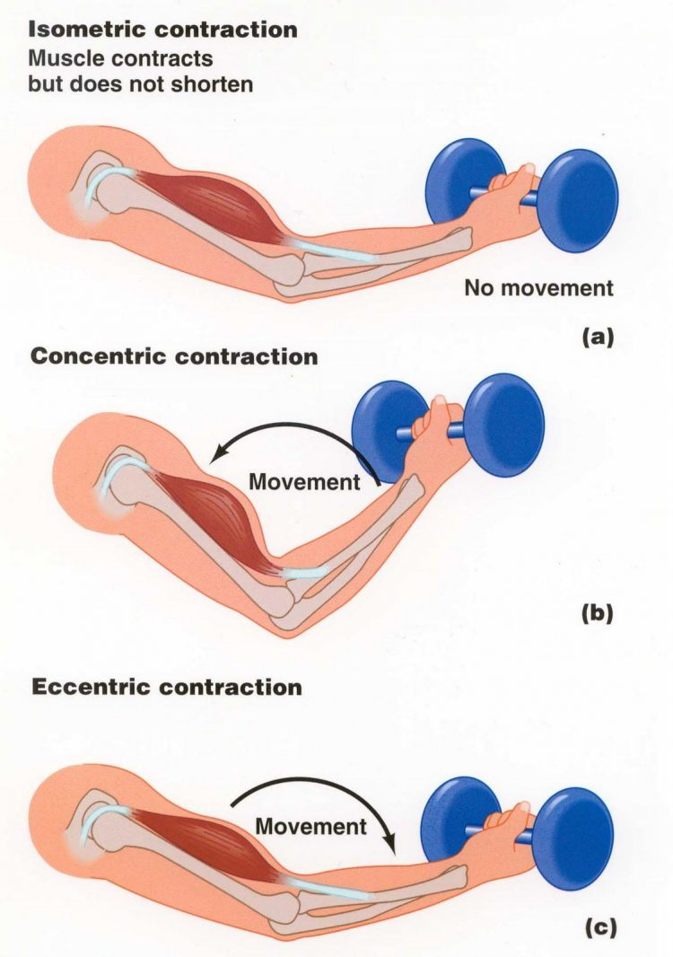 images2contracture-du-biceps-15.jpg